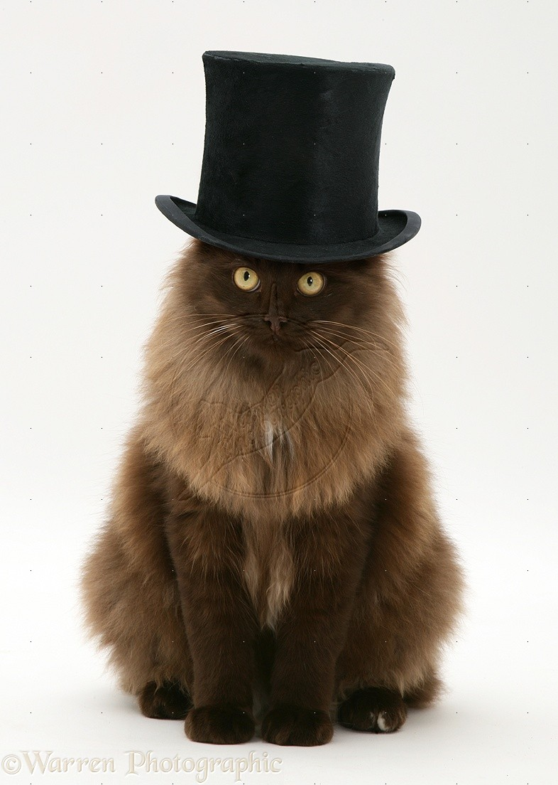 Top 10 Top Hat Wearers Pop Babble