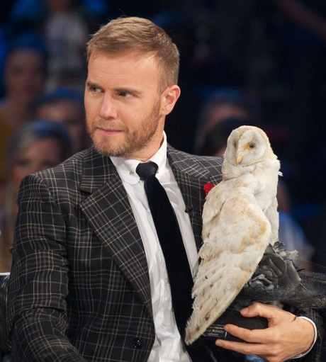 Owl Body Language Body Language That Owl is