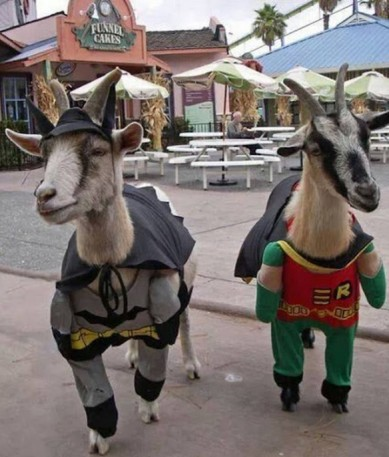 batman robin goats