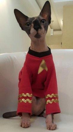 cat red shirt