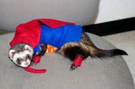 ferret superman
