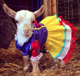 goat snow white