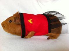 guinea pig star trek
