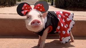 pig minnie mouse