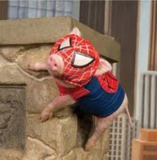 pig spider ham