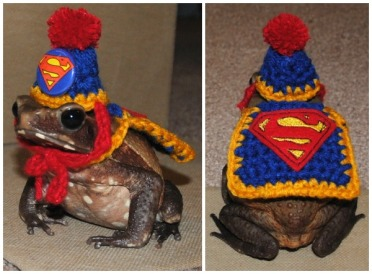toad superman